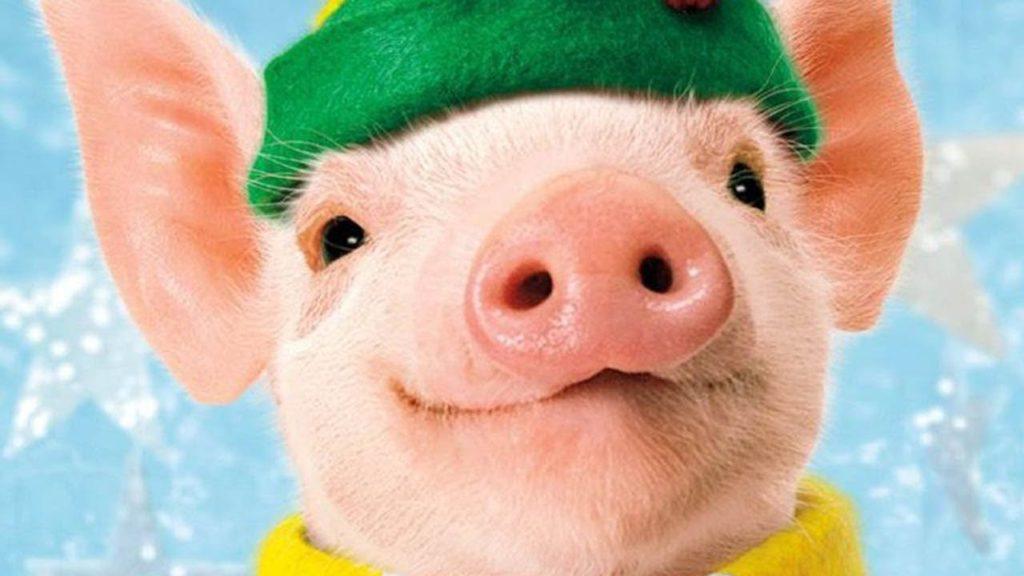 год свиньи характеристика